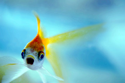 Can Fish Food Cause Cloudy Water