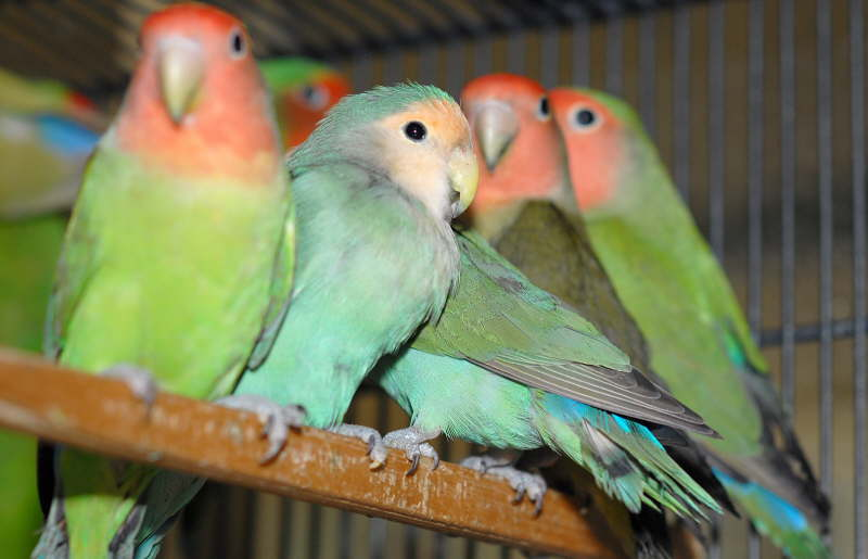 Singing Birds Live Wallapaper - Android Apps on Google Play