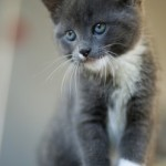 muffin-our-new-kitten_4
